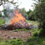 brennender Grünschnitt